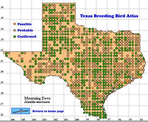 dove migration map texas mourning dove the texas bird atlas
