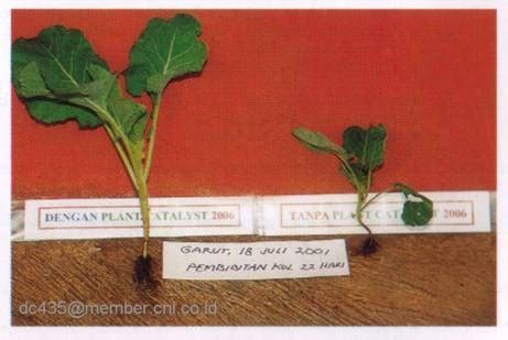 Cni Plant Catalyst 2006 1 5 Kg solusi subur cni apakah plant catalyst 2006 itu