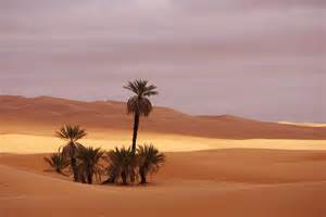 Pretty Shower Curtain Beautiful Desert Photograph By Ivan Slosar