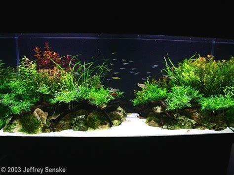 aga aquascaping contest 72 best images about planted aquarium aquario plantado