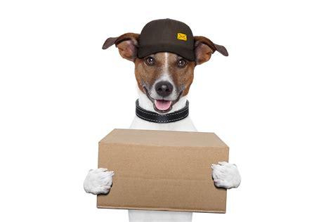 walmart puppy supplies buy pet supplies discount pet toys pet shop petstore pets world