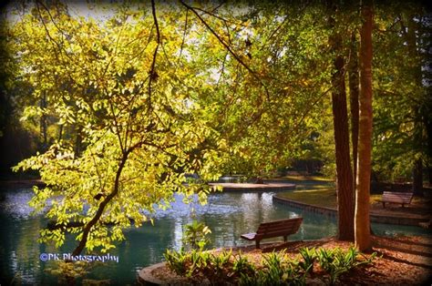 Mercer Botanical Gardens Mercer Arboretum And Botanic Gardens Awesome Places I Been P