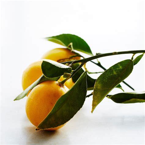 meyer lemon what is a meyer lemon williams sonoma taste