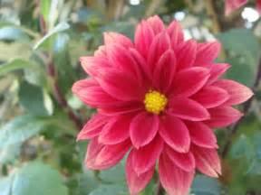 imagenes las flores galer 237 a de flores galer 237 as de im 225 genes