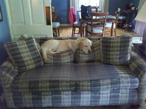 keep your dog off the couch pin by martita stivers lafler on pet ideas pinterest