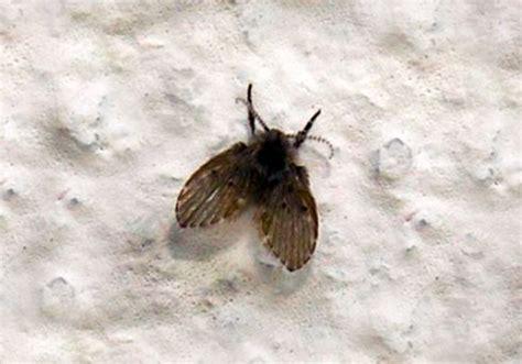 tiny moths in my bathroom small moths in bathroom 28 images small black flies in bathroom images frompo