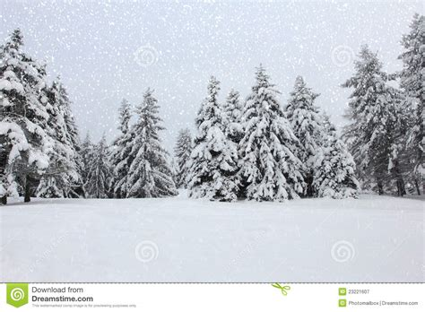 school in snow royalty free stock image image trees in the snow in the forest in winter royalty free