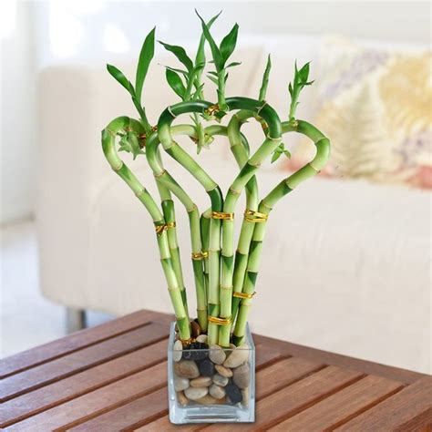 Indoor Plants by Low Light Indoor Plants You Can Decorate With