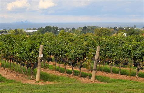 5 Wineries To Visit In Beamsville Ontario