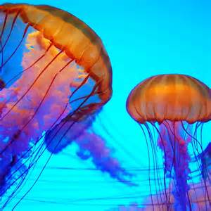 colorful jellyfish colorful jellyfish colors bold beautiful