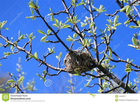 birds nest in tree bird nest in tree clipart clipart suggest