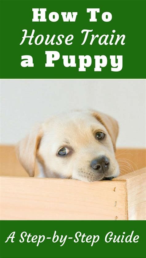 how to potty train a house dog how to house train a puppy follow these steps