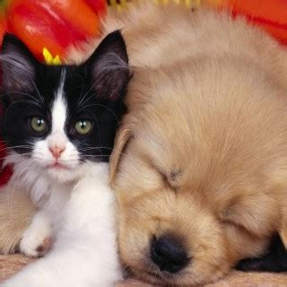 can cats and dogs babies tag for baby cats and dogs cats dogs what about baby platypus 3 elikes and kittens 2015 animals quotes cat babies