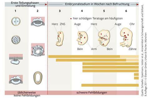 schwangerschaft wann beginnt die entwicklung vom embryo zum f 246 tus mamiweb de