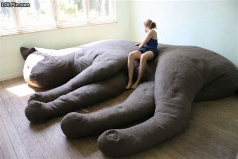 funny bed giant cat bed funny pictures 924 pic 2