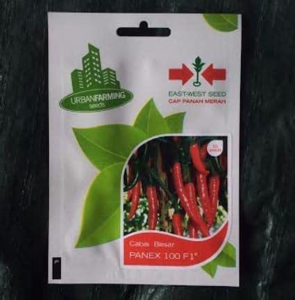 Benih Cabai Merah Besar jual benih cabai panex 100 f1 50 biji panah merah