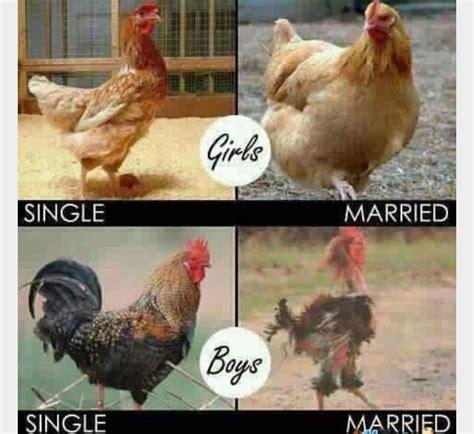 Chicken Memes - chicken memes backyard chickens
