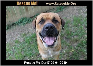 rottweiler rescue in pa pennsylvania rottweiler rescue adoptions rescueme org