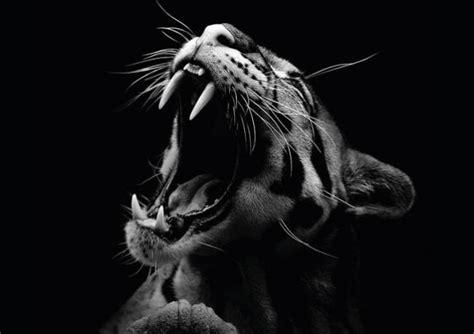 fotos en blanco y negro espectaculares animales y fotograf 237 a en blanco y negro martasevilla com