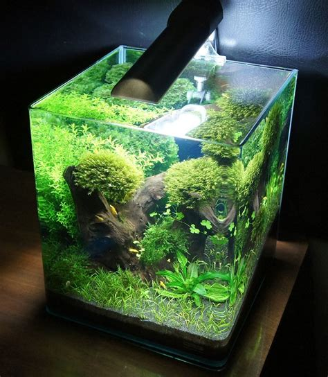 aquascape aquarium supplies 216 best images about aquascape on pinterest aquarium