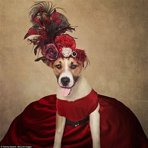 best place to find puppies homeless dogs pose for photographer tammy swarek in outlandish costumes daily mail