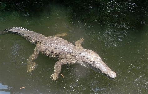 Find In Jamaica The Wonderful Animals You Ll Find In Jamaica