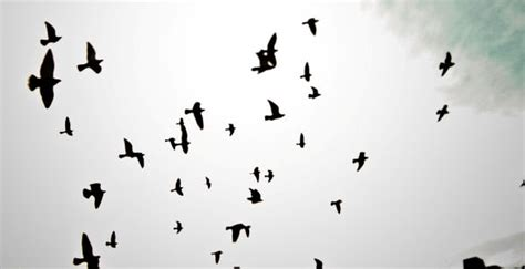 birds brushes free download