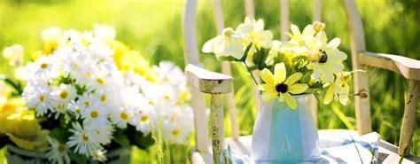 foto fiori gialli 10 fiori gialli per luce al giardino