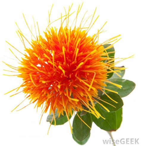 what is safflower with pictures