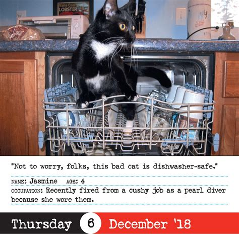 bad cat page a day calendar 2018 workman publishing 9780761193715 books amazon ca