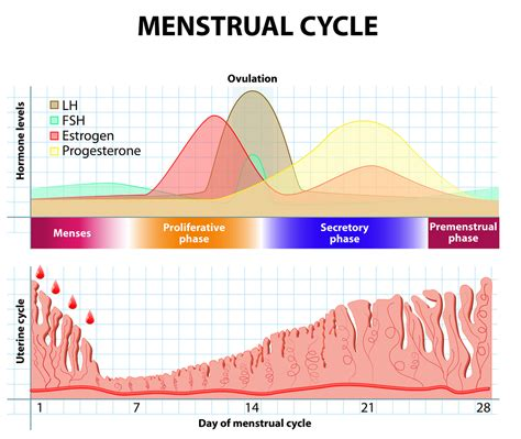 wann hat frau fruchtbare tage progesterone levels in early pregnancy