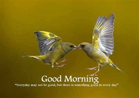 good morning images bird quotes good morning images