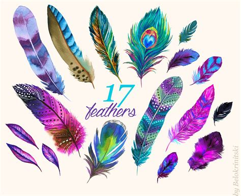 water color feather watercolor feathers illustrations creative market