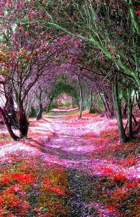 wisteria tunnels tokyo wisteria flower tunnel in tochigi japan holidayspots4u