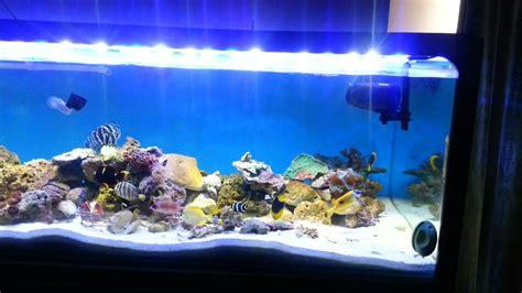 iluminacion de peceras iluminaci 243 n para acuarios marinos 185 000 en mercado libre