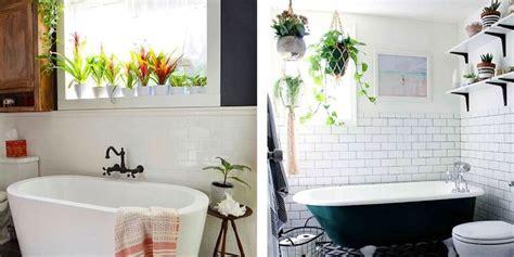 bathroom plants inspiration   hang plants