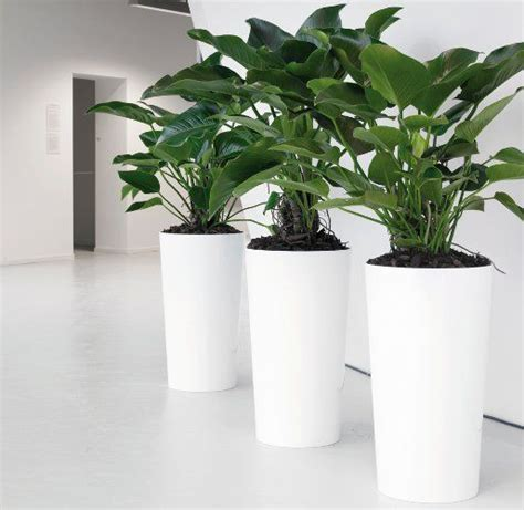 office plant decoration kl 89 best inspirations for office decoration images on
