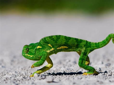 fotos animales reptiles nature wallpaper animales reptiles darkolivegreen
