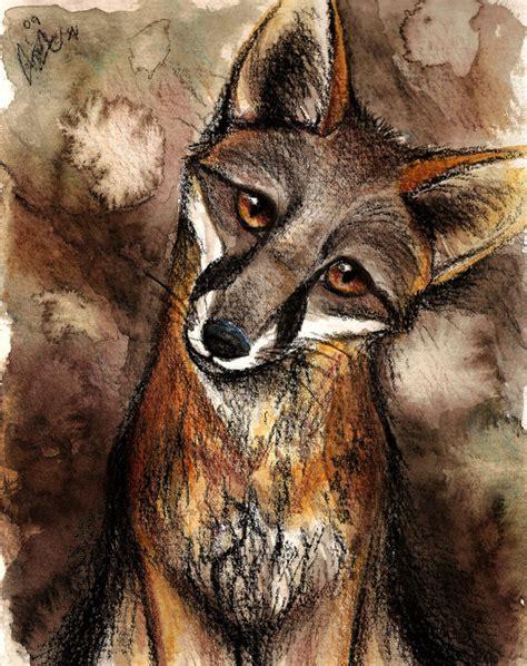 family fox fan gray fox fox fan 24572783 fanpop