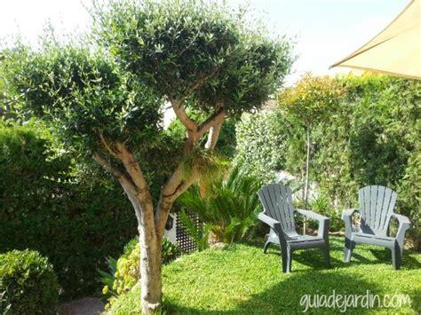 imagenes de jardines tematicos podar un olivo con forma guia de jardin