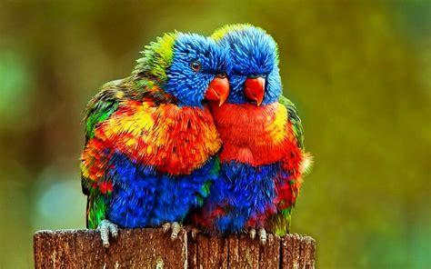 Arins Rainbow Biru Tua Mukena 10 spesis burung eksotik yang anda tak pernah lihat iluminasi