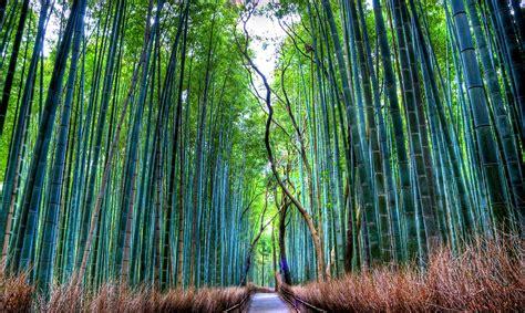 imagenes bonitas bosque de fantasias 6 bosques de fantas 237 a el viajero feliz