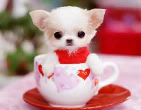 Very cute puppies for you pictures to pin on pinterest