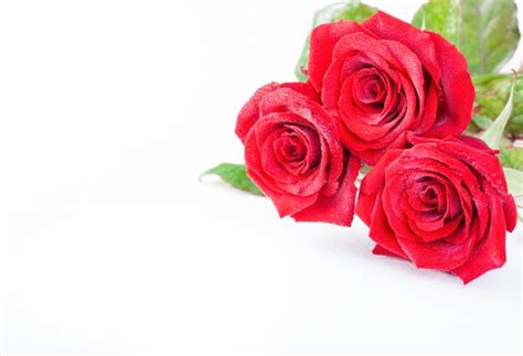 imagenes de rosas lindas gratis rosas vermelhas bonitas baixar fotos gratuitas