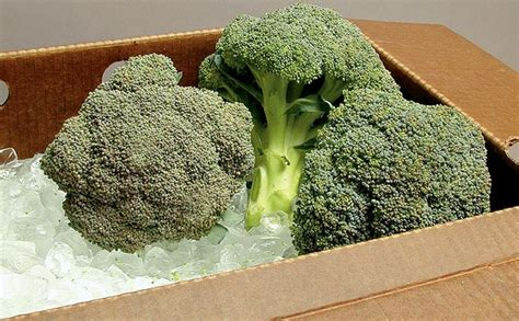 Broccoli Shelf cooling storing chart for freshly harvested summer produce johnny s selected seeds