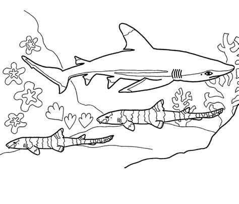 shark coloring pages coloring kids