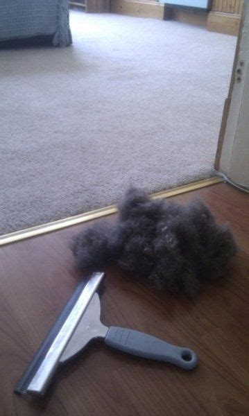 remove dog hair from couch 25 unique remove pet hair ideas on pinterest remove cat