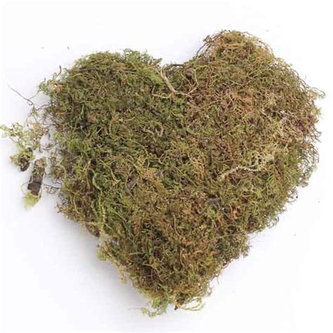 natural dried sheet moss artificial greenery floral supplies craft supplies