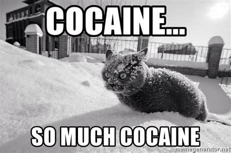 Cat Cocaine Meme - cocaine so much cocaine cat in snow meme generator