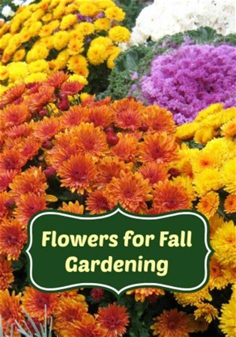 gardening tips for beginners the best flowers for fall gardening
